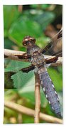 Common Whitetail Dragonfly - Plathemis Lydia - Male Bath Towel