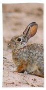 Cottontail Bunny Bath Towel