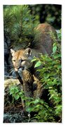 Cougar Coming Through Bath Towel
