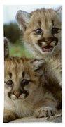 Cougar Cubs On A Rock Bath Towel