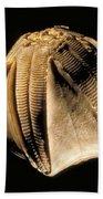 Crinoid Fossil Bath Towel