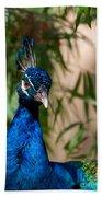 Curious Peacock Bath Towel