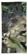 Decorator Crab, Indonesia Bath Towel