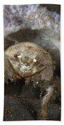 Decorator Crab With Mauve Sponge Bath Towel