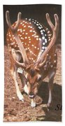 Deer Hand Towel