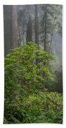Del Norte Redwoods Bath Towel