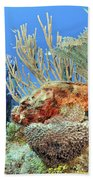 Diver Looks At Scorpionfish Bath Towel