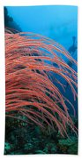 Divers And Whip Coral Bath Towel