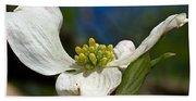 Dogwood Bloom Hand Towel