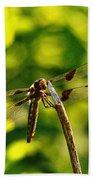 Dragonfly In Green Bath Towel