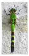 Eastern Pondhawk Dragonfly Bath Towel