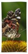 Echinacea Butterfly Meal Bath Towel