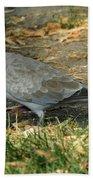 Eurasian Dove Bath Towel