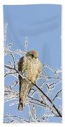 Eurasian Kestrel Falco Tinnunculus Bath Towel