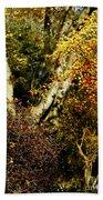 Fall Color Wall Art Landscape Bath Towel