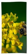 Fanfare For The Common Bumblebee Bath Towel