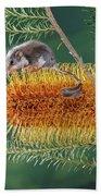 Feather-tail Glider Acrobates Pygmaeus Bath Towel