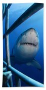 Female Great White And Underwater Bath Towel