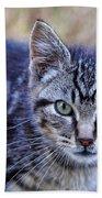 Feral Kitten Bath Towel