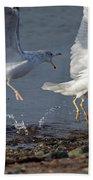 Fighting Gulls Bath Towel