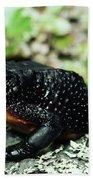 Fire-bellied Frog Atelopus Ignescens Bath Towel