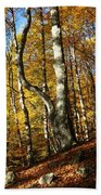 Forest Fall Colors 4 Bath Towel