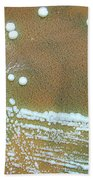 Francisella Tularensis Culture Bath Towel