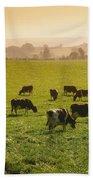 Friesian Cattle Cattle Grazing Bath Towel