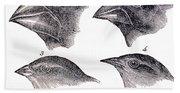 Galapagos Finches Bath Towel