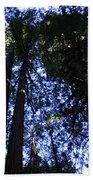 Giant Redwoods, Muir Woods, California Hand Towel