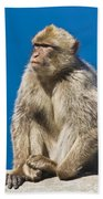 Gibraltar Barbary Macaque Macaca Bath Towel