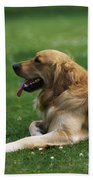 Golden Retriever Dog Laying In The Grass Bath Towel