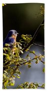 Good Morning Sunshine - Eastern Bluebird Bath Towel