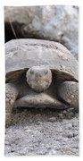 Gopher Tortoise Bath Towel