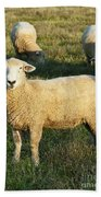Grazing Sheep. Bath Towel