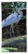 Great Blue Heron, Florida Bath Towel