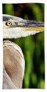 Great Blue Heron Portrait Bath Towel