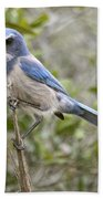 Greedy Florida Scrubjay Bath Towel