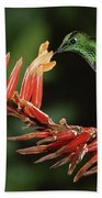 Green-crowned Brilliant Heliodoxa Bath Towel