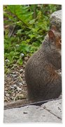 Grey Squirrel Bath Towel