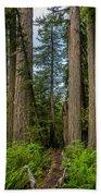 Group Of Redwoods Bath Towel