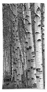 Grove Of Birch Trees Bath Towel