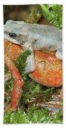 Harlequin Frog Atelopus Varius Pair Bath Towel