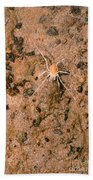 Harvestman Crosbyella Sp. In Cave Bath Towel
