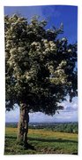 Hawthorn Tree On A Landscape, Ireland Bath Towel