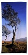 Hawthorn Trees In Sally Gap, County Bath Towel