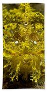 Head-on Portrait Of Yellow Bath Towel