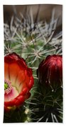 Hedgehog Cactus Flowers  Bath Towel