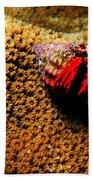 Hermit Crab On Coral Bath Towel
