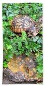 Hitchin A Ride On A Turtle  Bath Towel